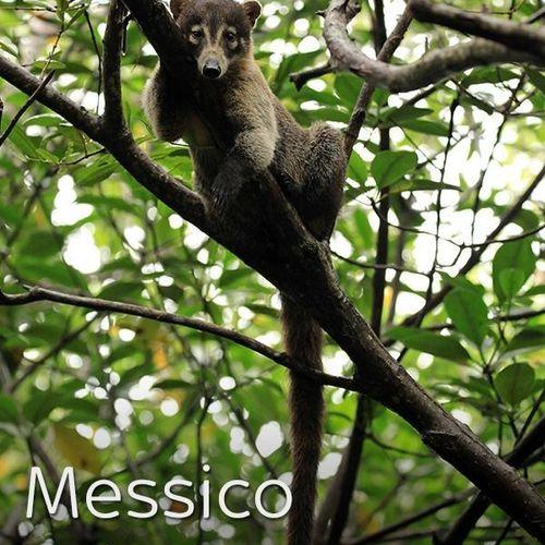 Messico selvaggio s1e3