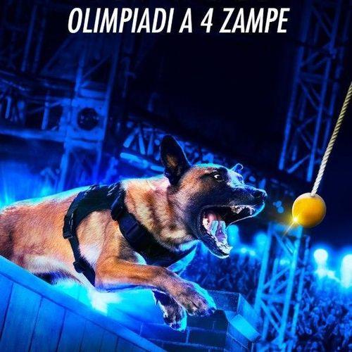 Top dog: olimpiadi a 4 zampe s1e8