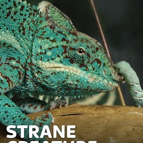 Strane creature s1e7