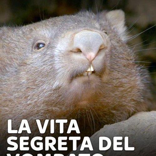La vita segreta del vombato s1e1