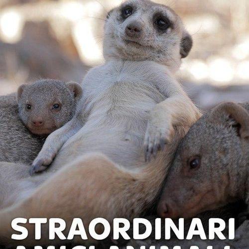 Straordinari amici animali s1e4