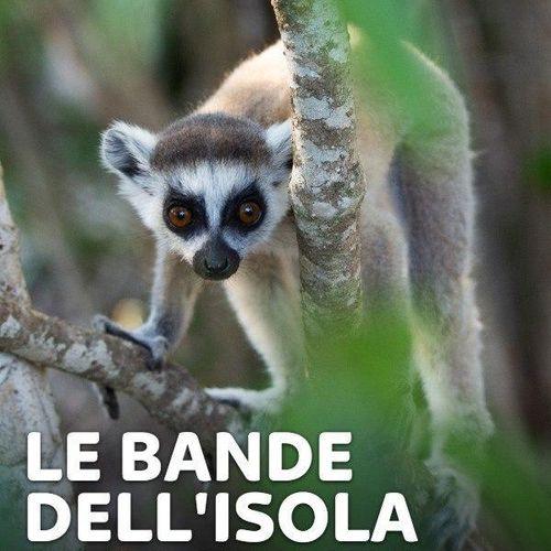 Le bande dell'isola dei lemuri s1e2