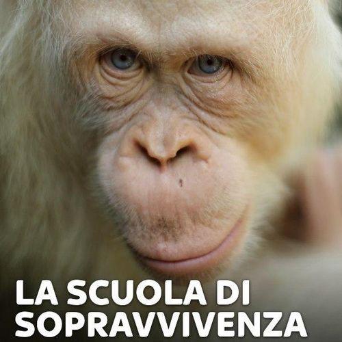 La scuola di sopravvivenza degli oranghi s2e8