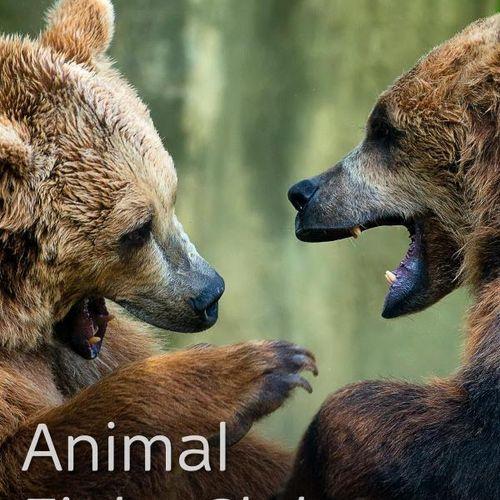 Animal fight club: senza regole s4e1