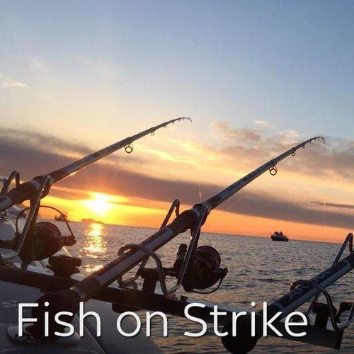 Fish on strike in tunisia s1e1